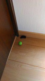 室内に居たコウモリ